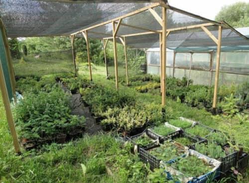 Затемнение растений