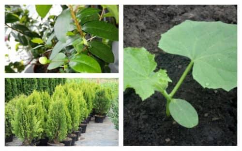 Выращивание ценных пород растений